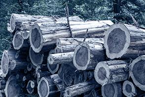 福岡県産材のみの使用で森林と都市の好循環